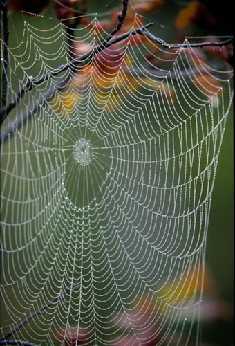 Web and Leaves
